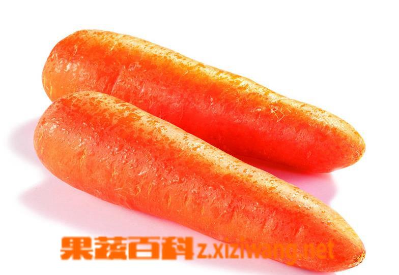 果蔬百科胡萝卜的功效与作用